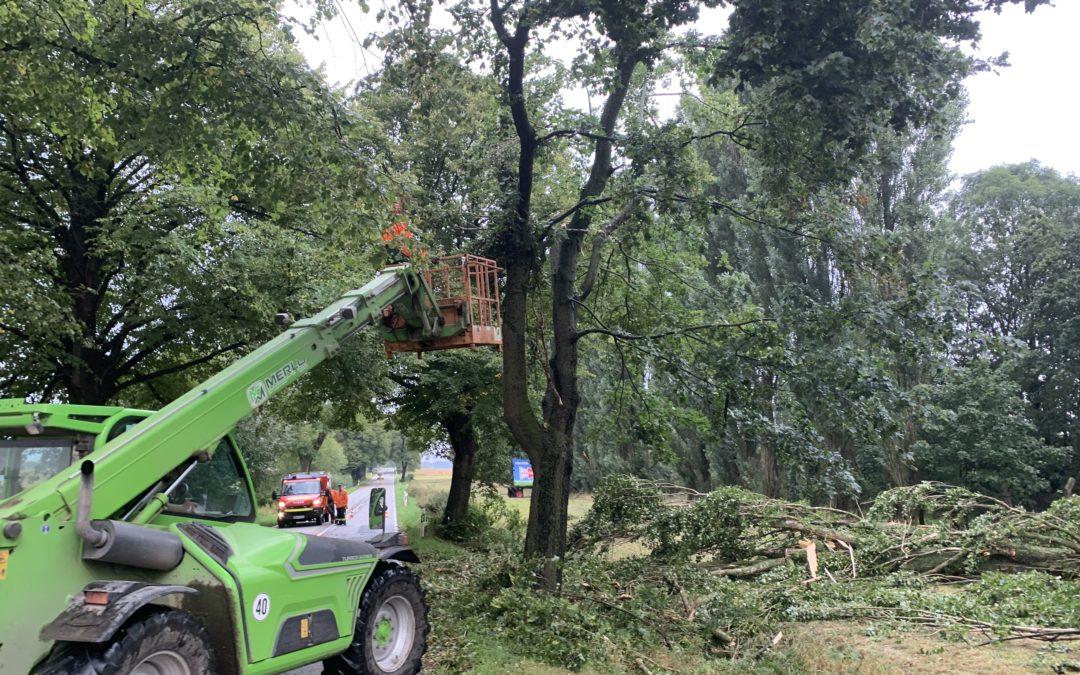 Einsatz: Baum auf Straße